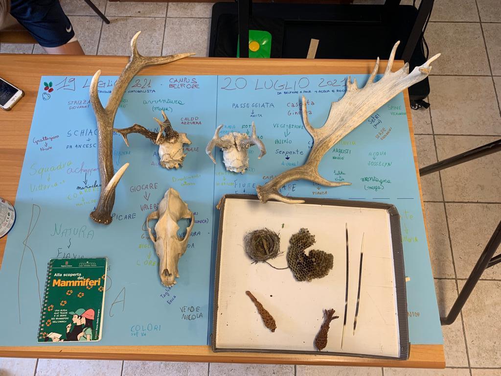 laboratorio conosci gli animali del bosco